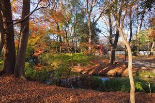 糺ノ森 下鴨神社 141208.jpg